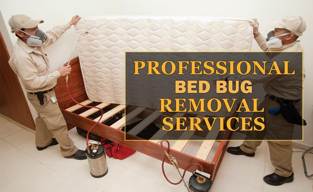 Why Choose AAA Exterminators For Bed Bug Treatment?