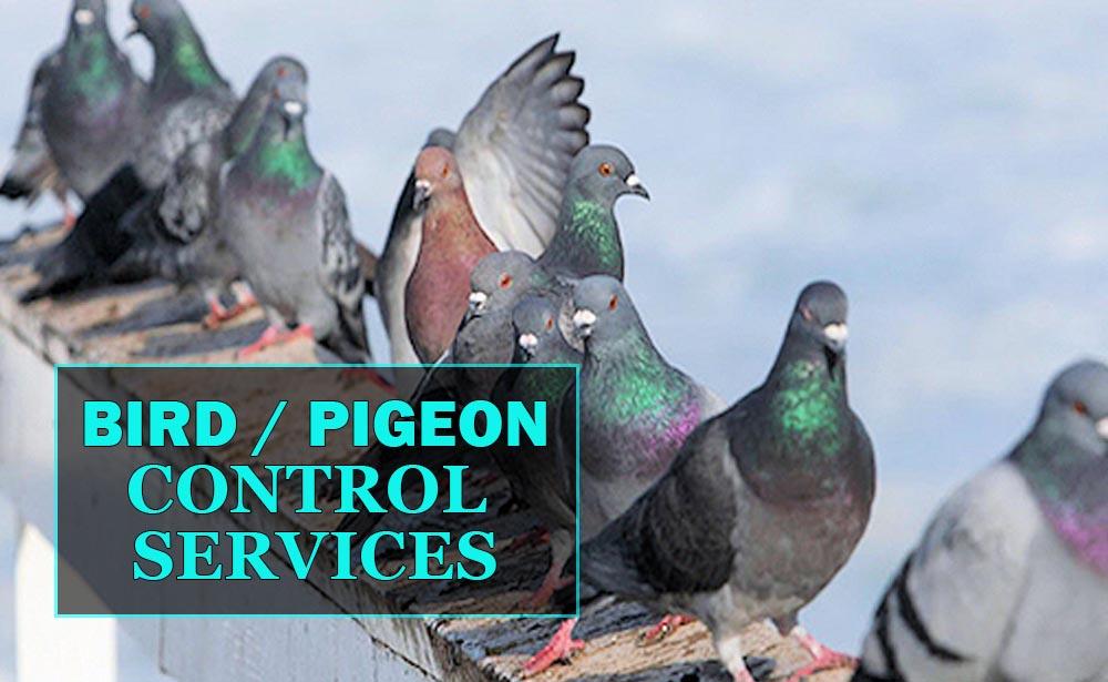 BirdControlServicesAlberta