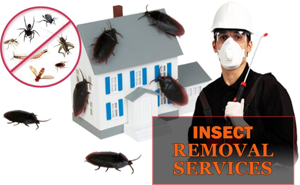 InsectRemovalServices