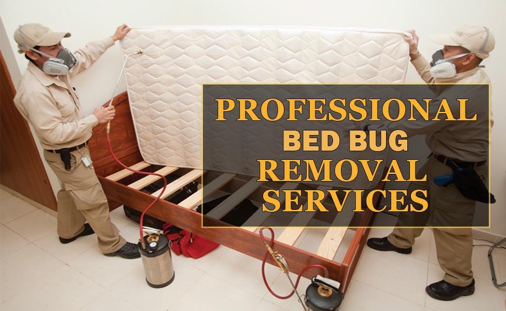 Professional-BedBug-Removal